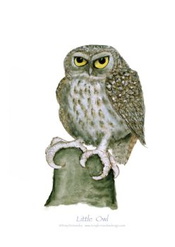 Little Owl - signed print